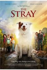 Stray (2017) The