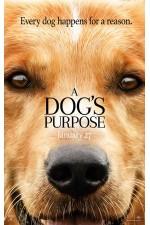 Dog's Purpose (2017)  A